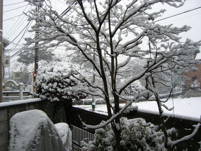 東京の雪.jpg